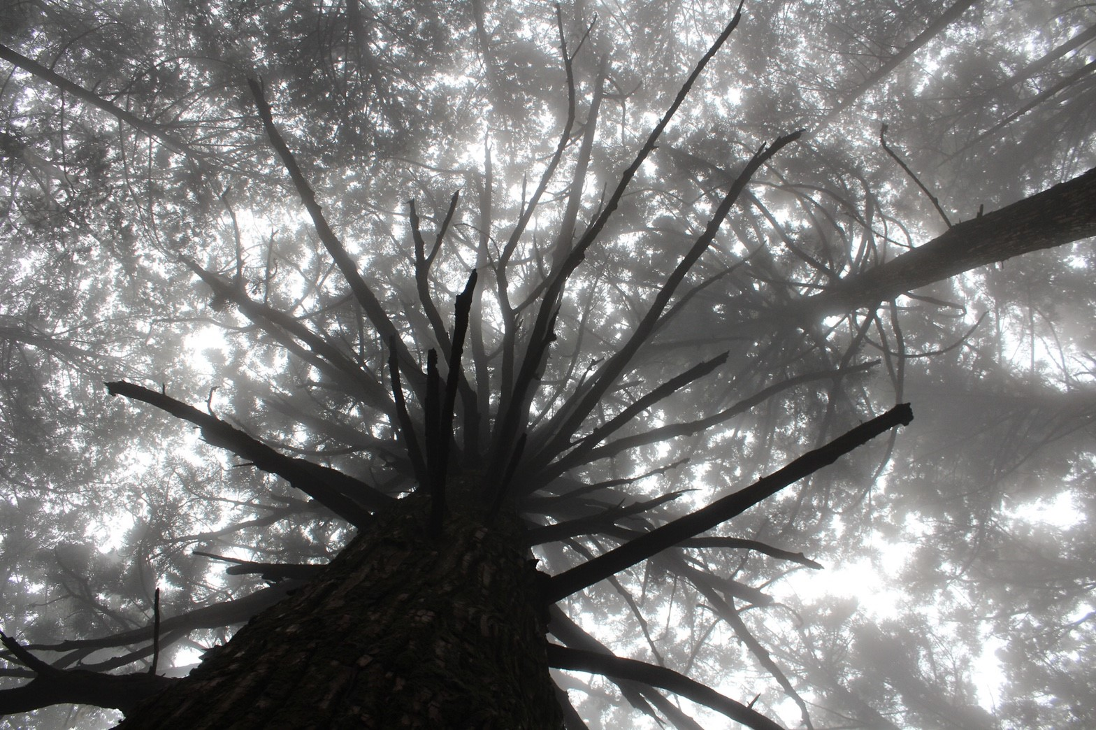 【埼玉 武甲山】存在感のある大杉に息を呑む