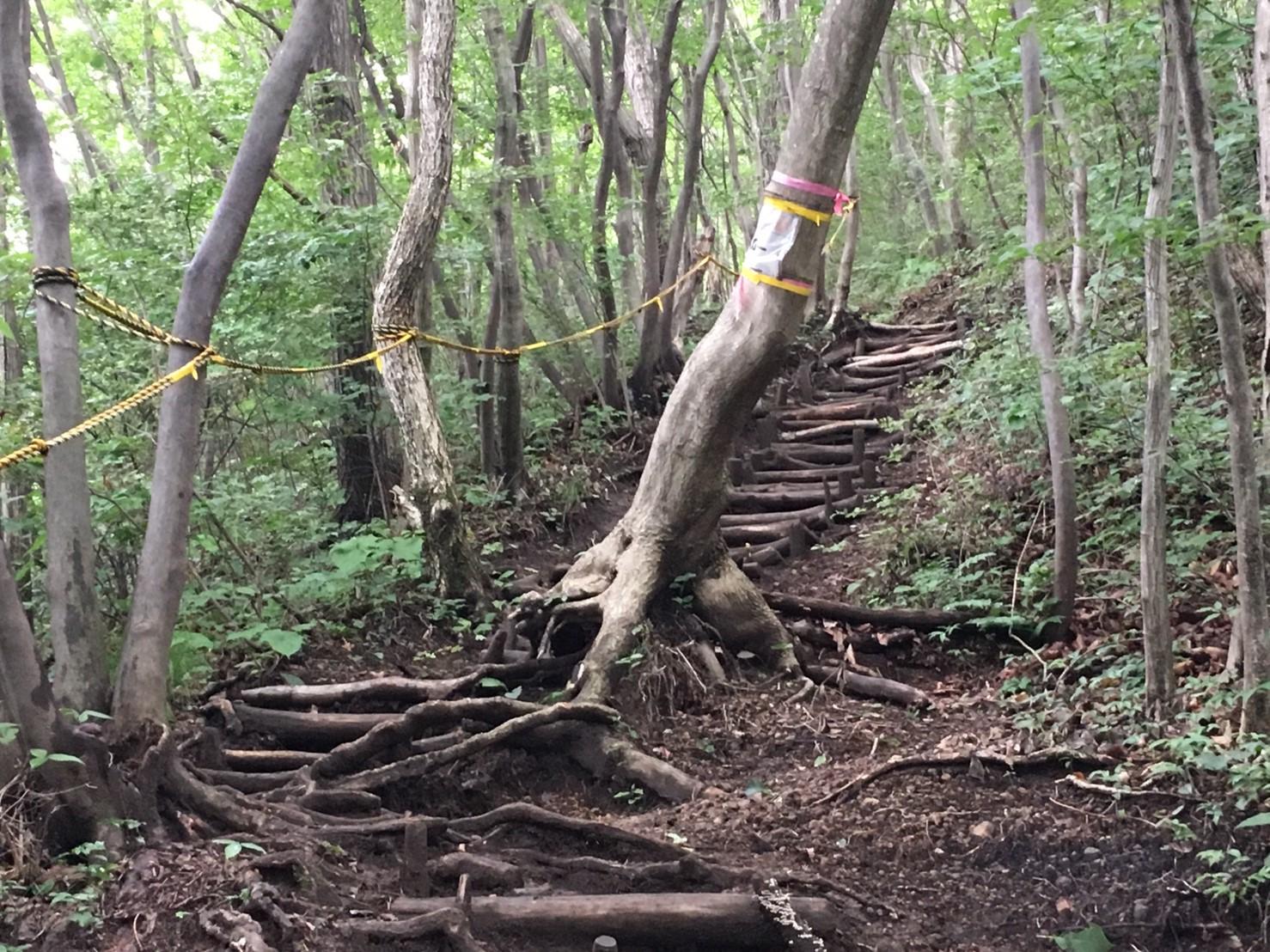 急な階段ですが、目印があるので迷いません。