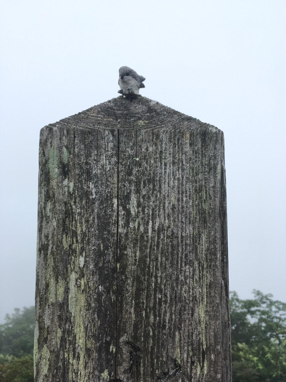 木の小鳥ちゃん。